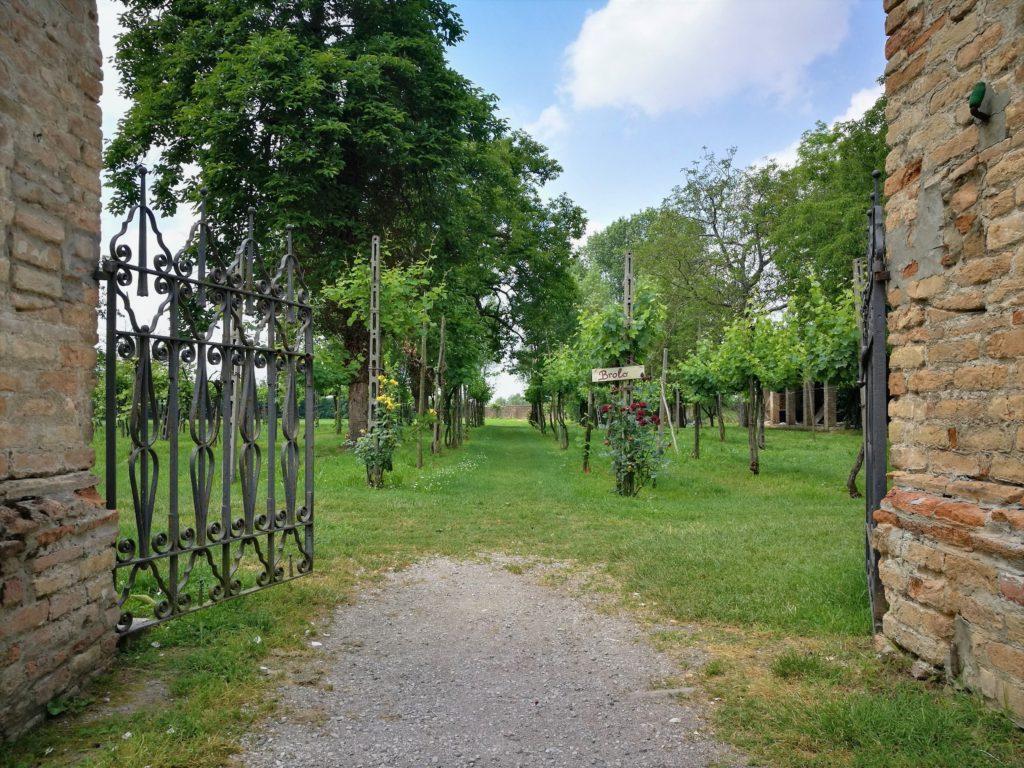 Villa Roberti, Vista sul Vigneto